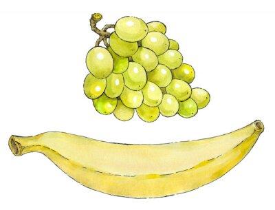 Vinilo Pintura de la acuarela de un conjunto de frutas: uva y plátano