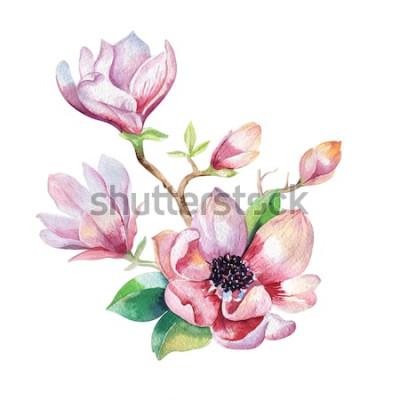 Vinilo Pintura Magnolia papel tapiz de flores. Dibujado a mano acuarela ilustración floral. Flor decorativa elemento natural. Fondo de agua de arte vintage.