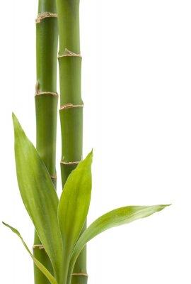Vinilo Planta de bambú