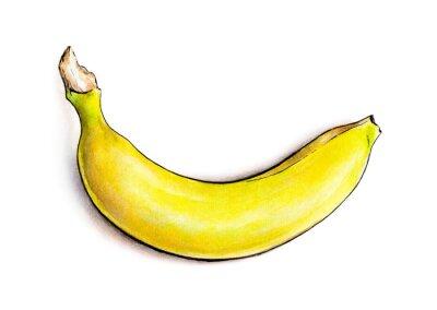 Vinilo Plátano aislado en el fondo blanco. Ilustración de la acuarela. fruta tropical