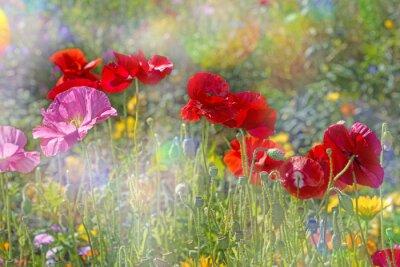 Vinilo Prado de primavera con amapolas rojas