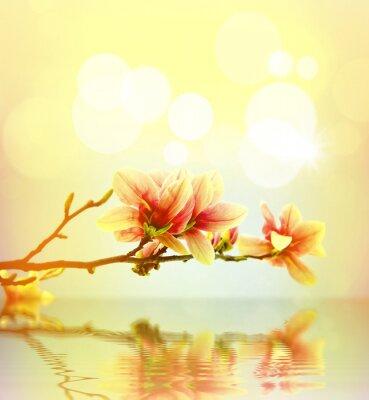 Vinilo Primavera de flores de magnolia fondo
