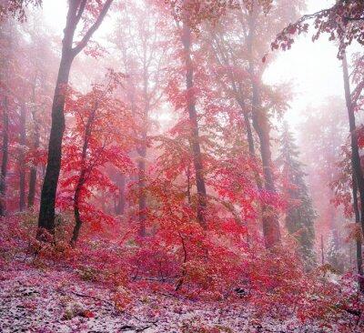 Vinilo Primera nieve en el otoño