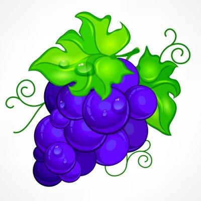 Vinilo Racimo de uvas azules con hojas verdes y gota de agua en blanco,