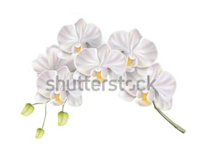 Vinilo Rama de flor de orquídea blanca realista con brotes en el tallo. Invitación de boda elegante, diseño de decoración de salón de spa. Tarjeta de invitación de matrimonio de vector, elemento de evento ro