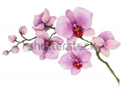 Vinilo Rama de orquídeas acuarela, dibujado a mano ilustración floral aislado en un fondo blanco.