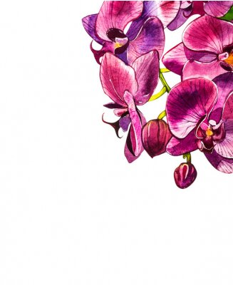 Vinilo Rama de orquídeas acuarela, dibujado a mano ilustración floral aislado en un fondo blanco. Ilustración acuarela de flora, pintura botánica, dibujo a mano.