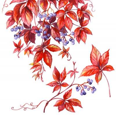 Vinilo Rama de uvas silvestres.