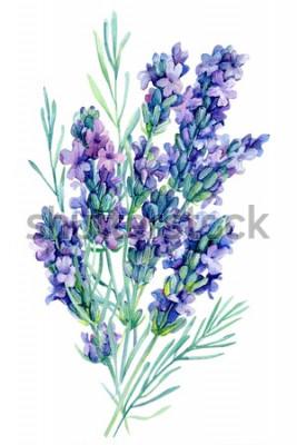 Vinilo Ramo de flores de lavanda acuarela ilustración sobre fondo blanco aislado