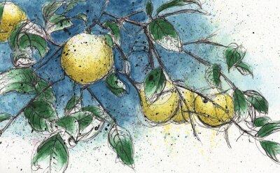 Vinilo Ramo de limonero