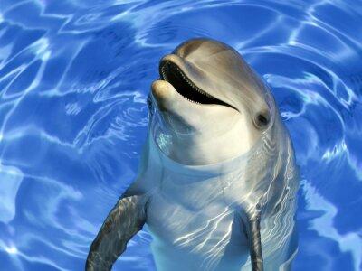Vinilo Retrato d'un commun delfín