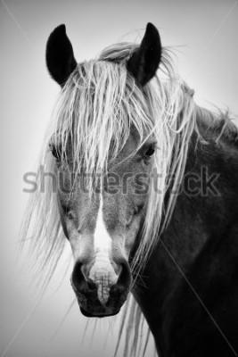 Vinilo Retrato de caballo blanco y negro