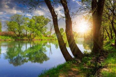 Vinilo río del bosque de piedras y hierba al atardecer
