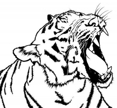 Vinilo Roaring Tiger - Dibujo Blanco y Negro Ilustración, Vector