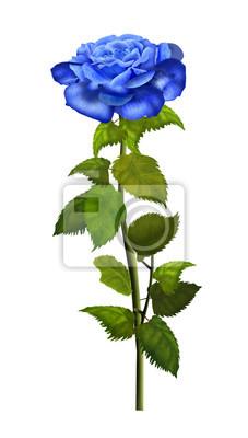 ffc5cf423 Vinilo Rosa flor azul aislado sobre fondo blanco. Ilustración digital.