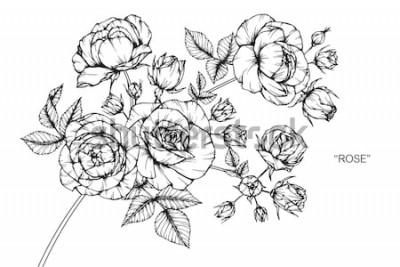 Vinilo Rosa flores dibujo y boceto con arte lineal sobre fondos blancos.