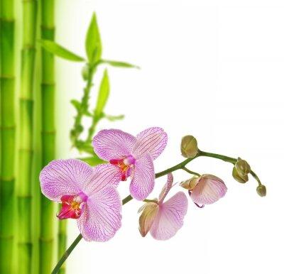 Vinilo rosa orquídea y bambú - fondo del balneario