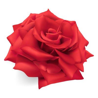 Vinilo Rosa roja. Dibujado a mano ilustración vectorial de una rosa roja, la reina de las rosas, símbolo de amor, coraje, compasión.