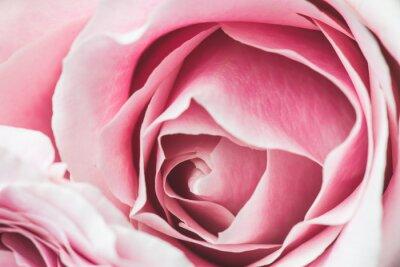 Vinilo Rosa Rosa Flor con poca profundidad de campo y se centran en el centro de la flor rosa
