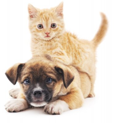 Vinilo Rred gatito en el perrito.