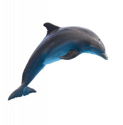 Vinilo saltando delfín en blanco