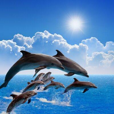 Vinilo Saltando delfines