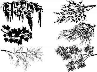 Vinilo Seis ramas de árbol de primavera en blanco