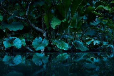 Vinilo Selva tropical con espejo de agua