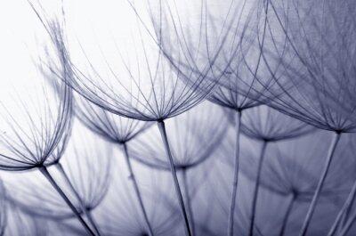 Vinilo semillas de diente de león
