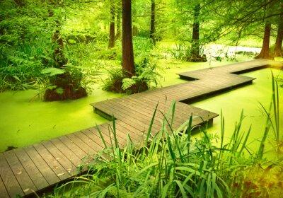 Vinilo Sendero moderno o pasarela sobre un estanque en el bosque. Viejos árboles de pie en un páramo o pantano en el bosque. Rayo de sol y luz suave cayendo a través de las copas de los árboles.