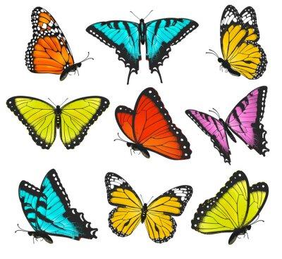 Vinilo Set of colorful butterflies illustration