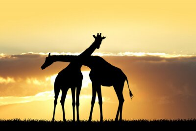 Vinilo Silueta de la jirafa en la puesta del sol