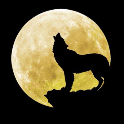 Vinilo Silueta de un lobo delante de la luna