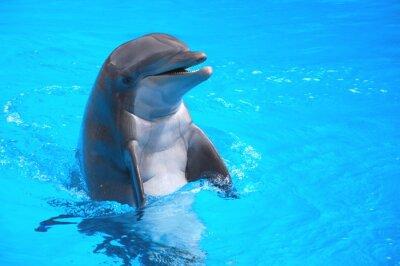 Vinilo Śmiejący się delfin w Loro Parque na Teneryfie