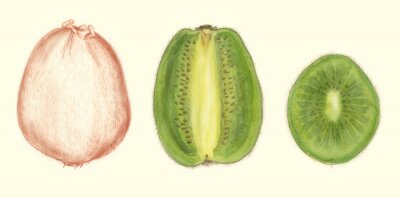 Vinilo Studi di frutta: kiwi