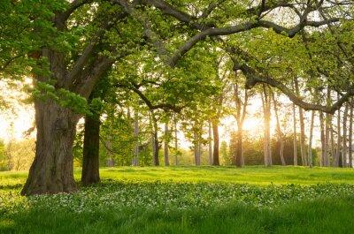 Vinilo Sunlight in the green forest springtime