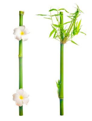 Vinilo tallos de bambú con hojas y flor de frangipani está aislado en