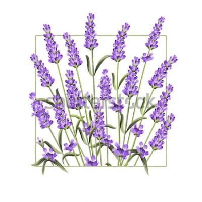 Vinilo Tarjeta elegante con flores de lavanda. El marco rectangular de lavanda y el texto Verano. Borde de lavanda para su presentación de texto. Ilustración vectorial