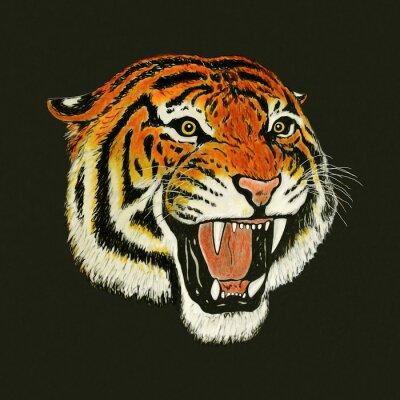 Vinilo tiger roar drawing