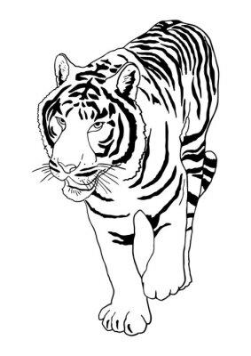 Vinilo Tigre blanco