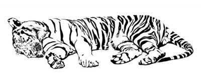Vinilo Tigre el dormir.