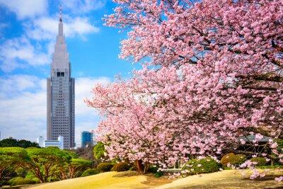 Vinilo Tokio, Japón en Shinjuku Gyoen Park en la primavera