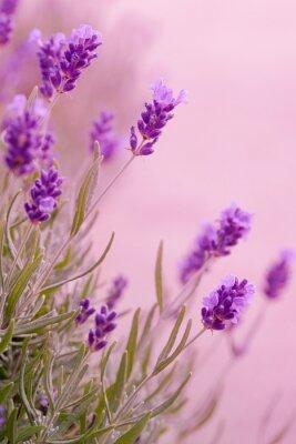 Vinilo Tonos violetas