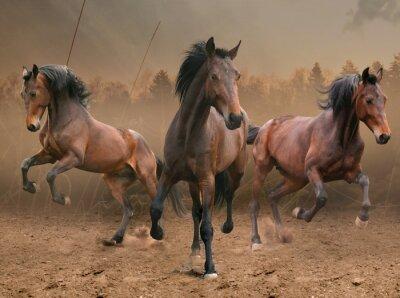 Vinilo tres caballos