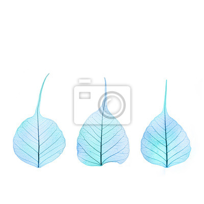 Tres de color azul invierno seco hojas - estructura celular ...