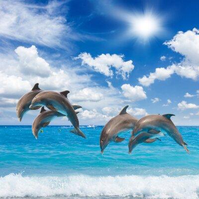 Vinilo Tres delfines saltando