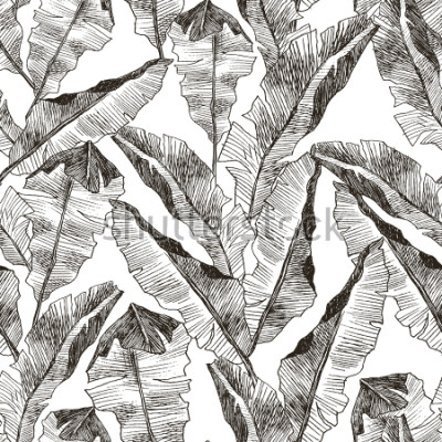 Vinilo Tropic plants floral seamless jungle pattern. Print vector background of fashion summer wallpaper palm banana leaves in black and white gray style