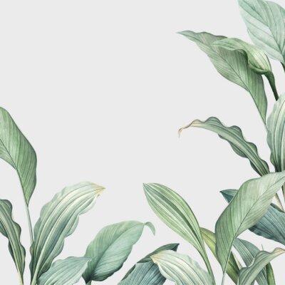 Vinilo Tropical leaves background