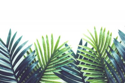 Vinilo Tropical leaves foliage plant close up with white copy space background.Nature and summer concepts ideas