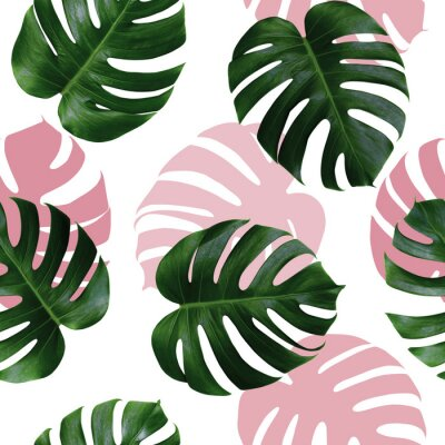 Vinilo Tropical leaves monstera,green leaf with pink shadow on white background.Monstera seamless pattern colorful illustration pink leaf,tree tropical exotic leaf for wallpaper textile vintage Hawaii style